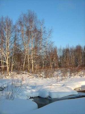 Зима. Фото Л. О. Псёл