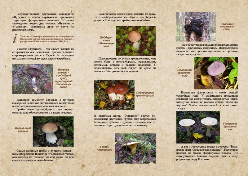 Таинственный мир грибов Тулашора