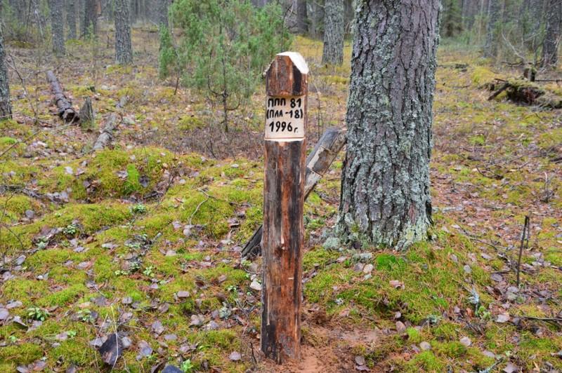Новая разметка ловчей линии для учета мышевидных грызунов ППП-81 (ПЛЛ-18). Фото Е.П. Лачоха.