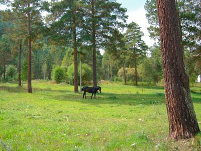 Лошади в Хакасии - непременный элемент ландшафта