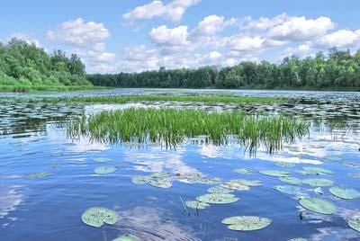 Озеро Кривое. Фото Н. Н. Ходырева