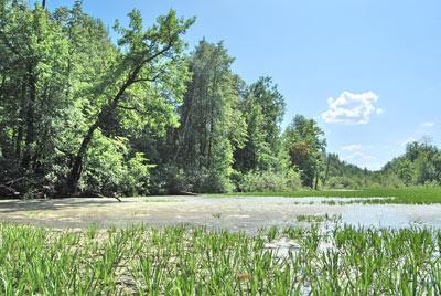 Озеро Малое Кривое.  Фото Н. Н. Ходырева