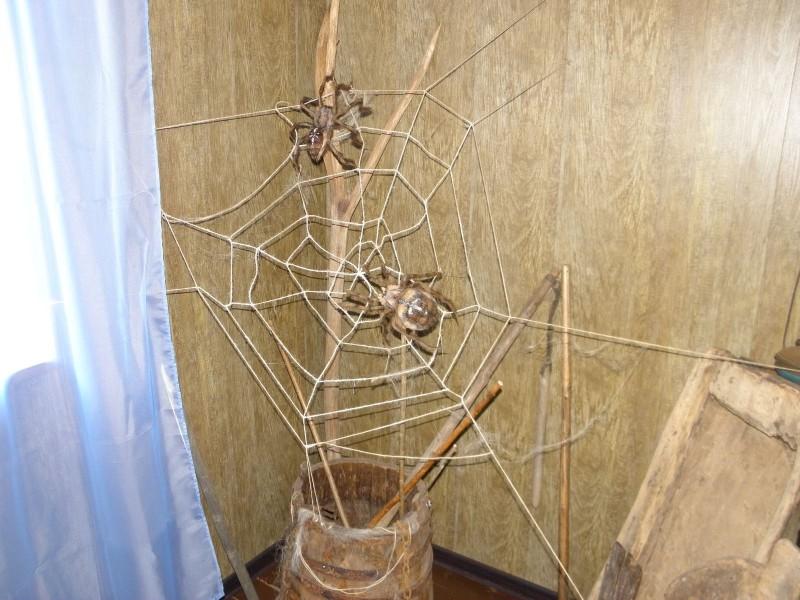 Пауки крестовики. Фото Целищевой Л. Г.