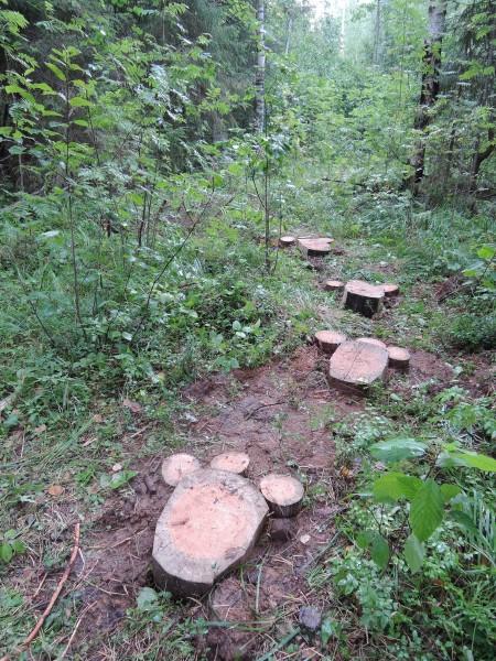 В вятских лесах вновь появились следы Йети