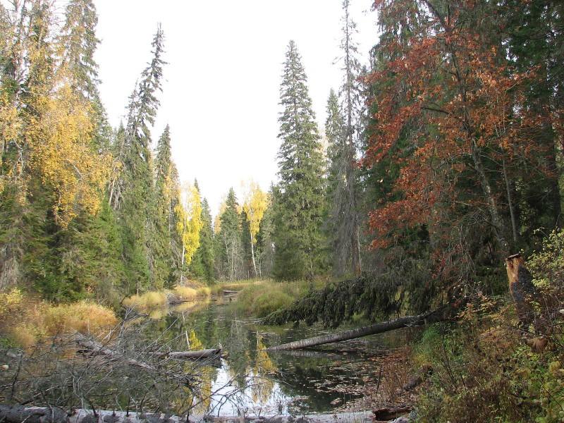 Осенняя Федоровка. Фото В. М. Рябова