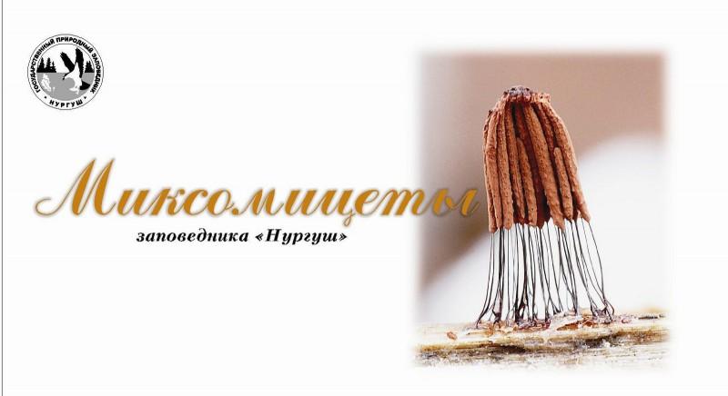 Календарь Миксомицеты заповедника НУРГУШ