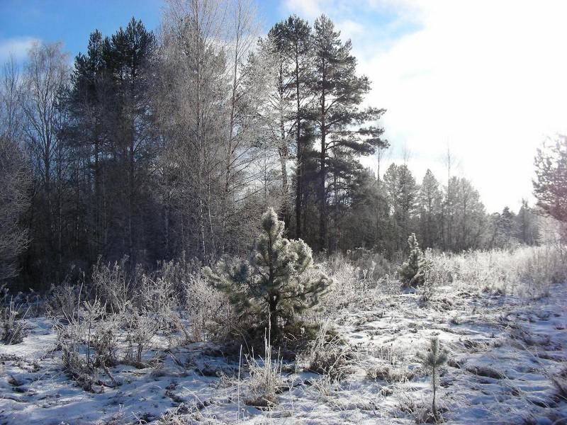 Ноябрьский лес. Фото Кондруховой С.В.