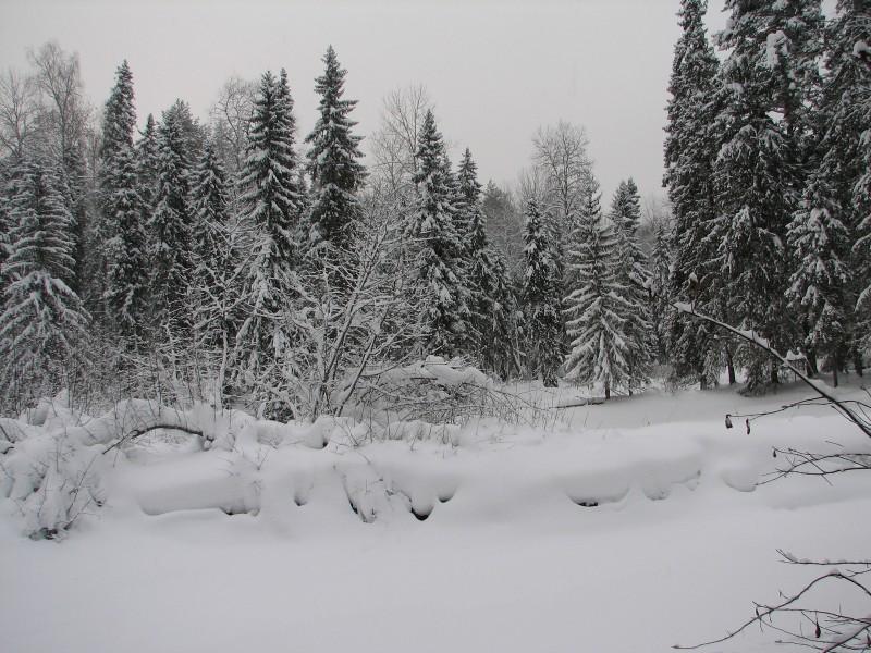 Зима в заповеднике. Фото Рябова В.М.