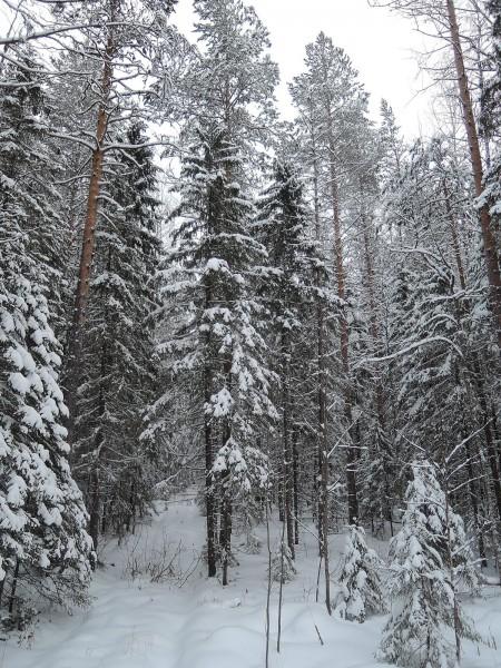 Граница Кировской области и Республики КОМИ. Фото Е. М. Тарасовой