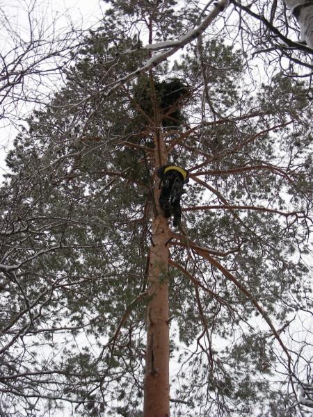 Спуск вниз. Гнездо установлено. Фото С.В.Кондруховой
