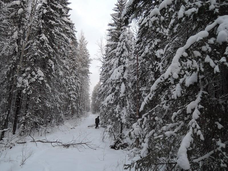 Зимняя дорога. Фото Е. М. Тарасовой