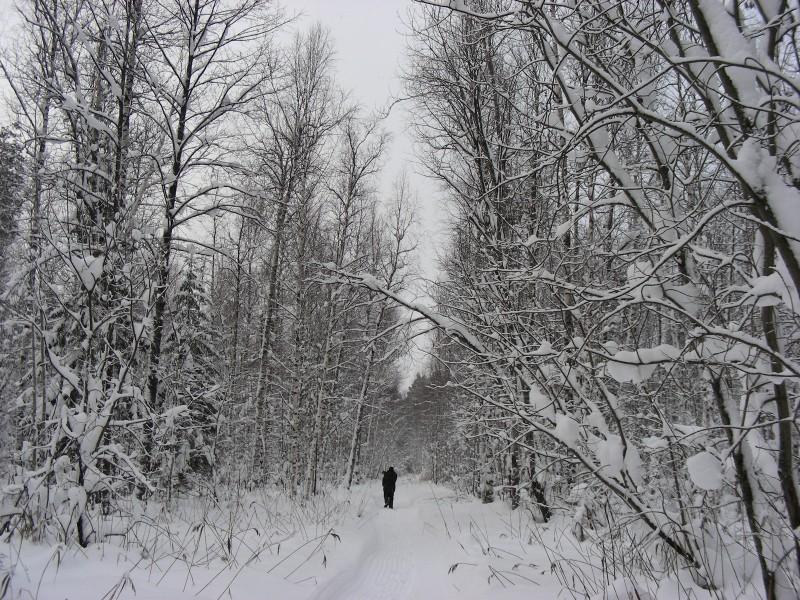 Учет зимующих птиц. Фото С.В. Кондруховой