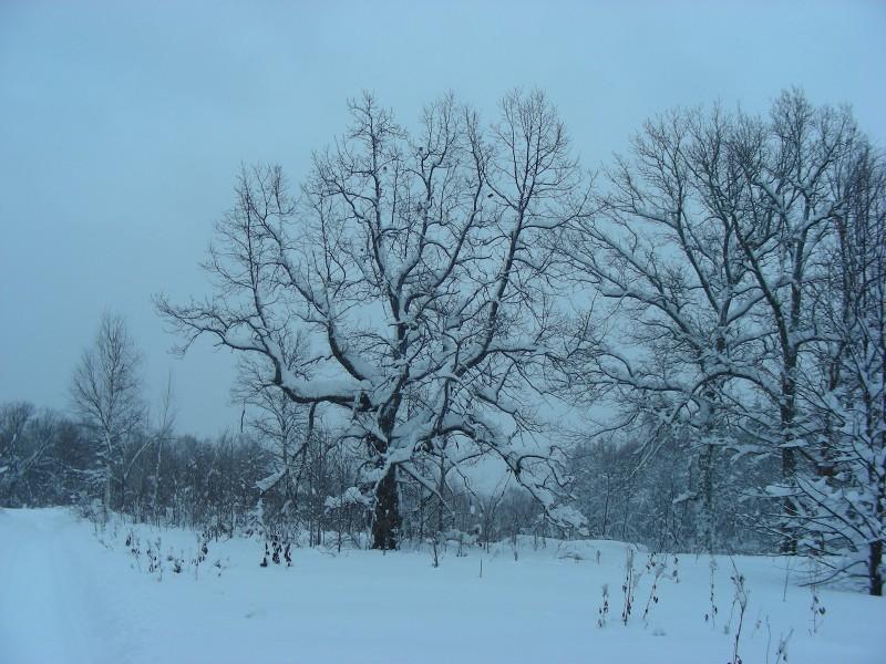 Зима в заповеднике. Фото С.В.Кондруховой