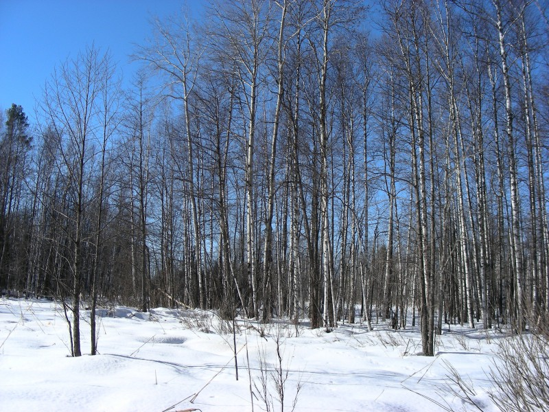 Голубой март. Фото С.В.Кондруховой