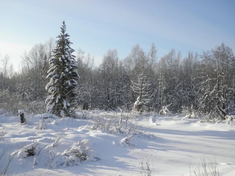 Зима в заповеднике. Фото Л.Г.Целищевой