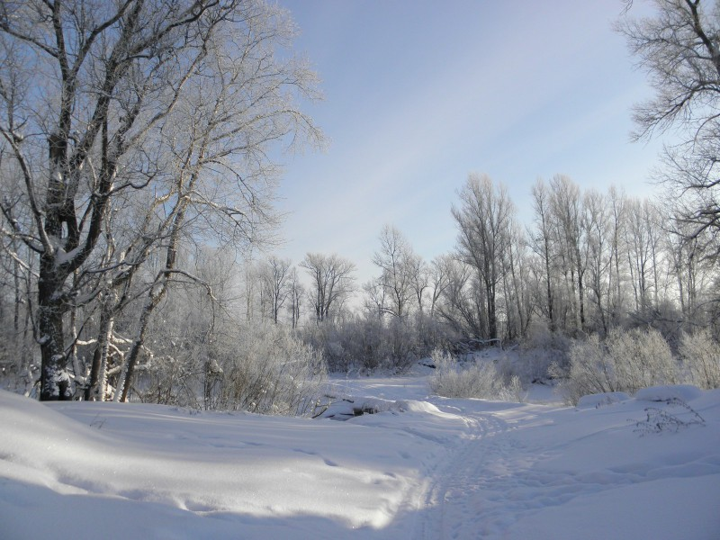 Зимняя дорога. Фото Л.Г.Целищевой