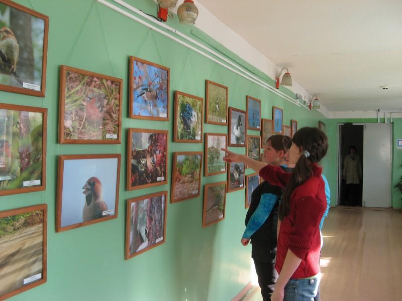 Школьники с интересом рассматривают выставку В мире животных. Голос природы