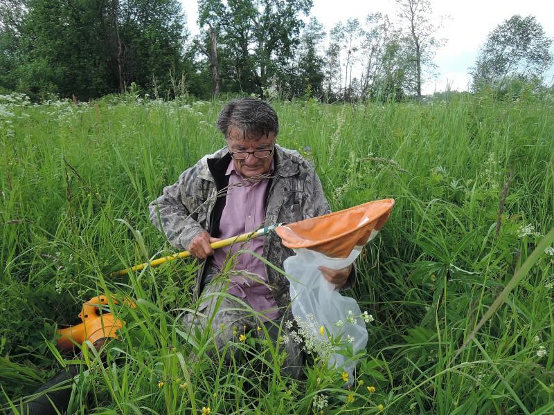 Г.А. Ануфриев - сбор насекомых с помощью сачка. Фото Е.М. Тарасовой