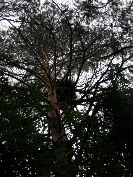 Гнездовая платформа, заселенная большим подорликом в 2015 г. Фото С.В. Кондруховой