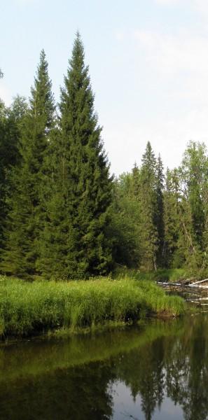 Река Федоровка. Фото Л.Г. Целищевой