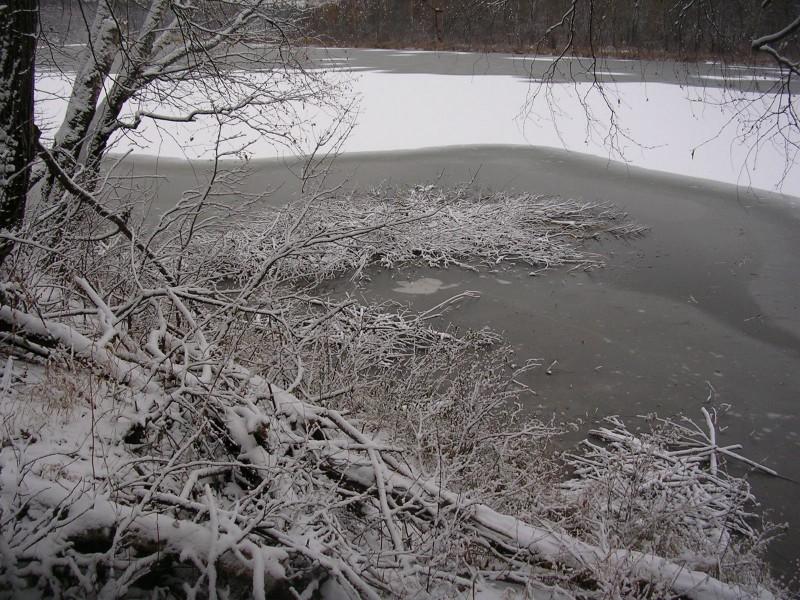 Зимние заготовки веточного корма. Фото С. Е. Шубина