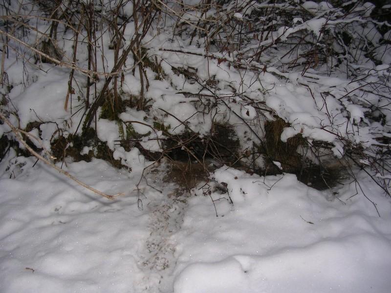 Нора и следы норки. Фото С.Е. Шубина