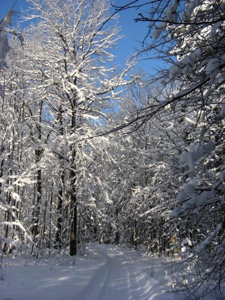Заповедник зимой. Фото С. В. Кондруховой