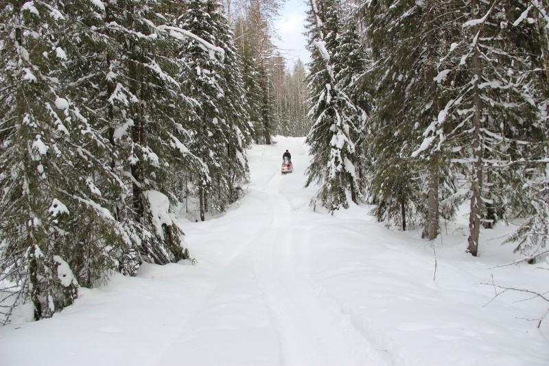 На зимнем маршрутном учете. Фото Е. В. Князевой
