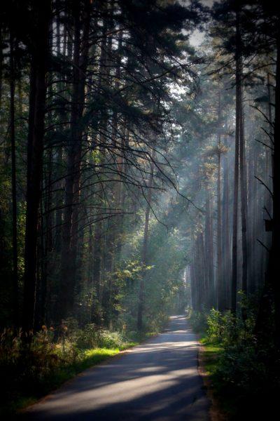 НП Нижняя Кама , Танаевский лес, кв.109 фото Раушании Хамитовны Гариповой