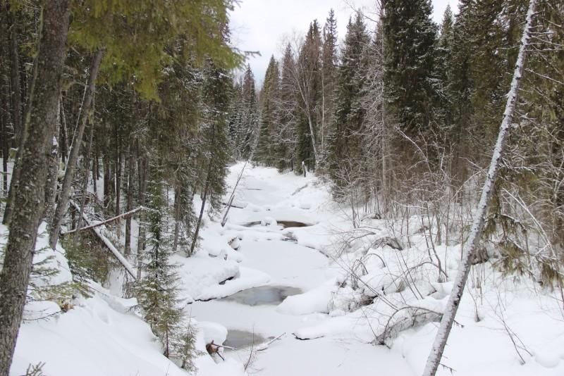 Река Федоровка. Фото Е. В. Князевой