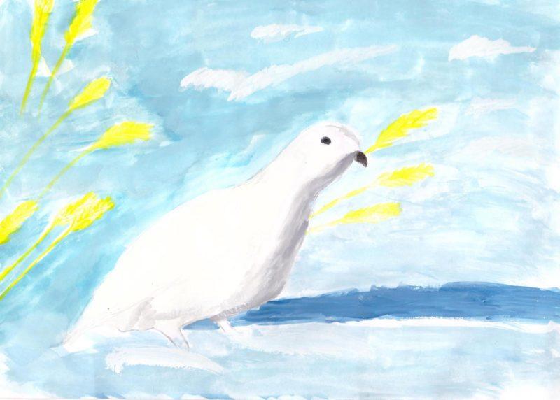 Белая куропатка. Рис. И. Пожидаевой