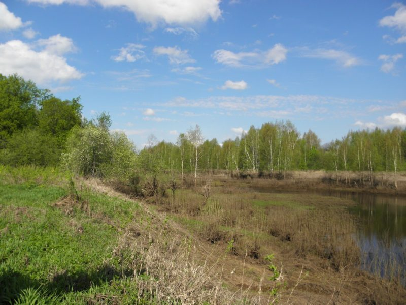 Протока на оз. Кривое. Фото Л. Г. Целищевой
