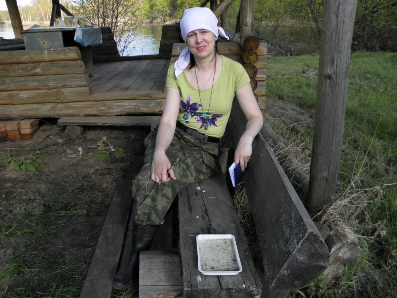 Е. В. Панюкова проводит эксперимент по комариной диете. Фото Л. Г. Целищевой