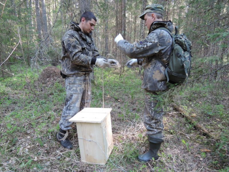 Подготовка к подъёму совятника. Фото Е. М. Тарасовой