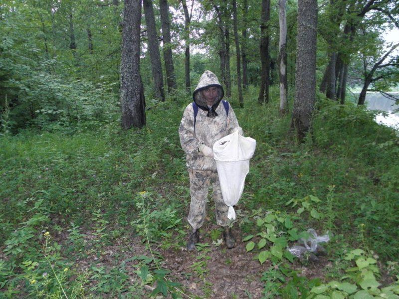 Просеивание (сифтование) лесной подстилки в дубраве А.В. Усковой. Фото Л.Г. Целищевой