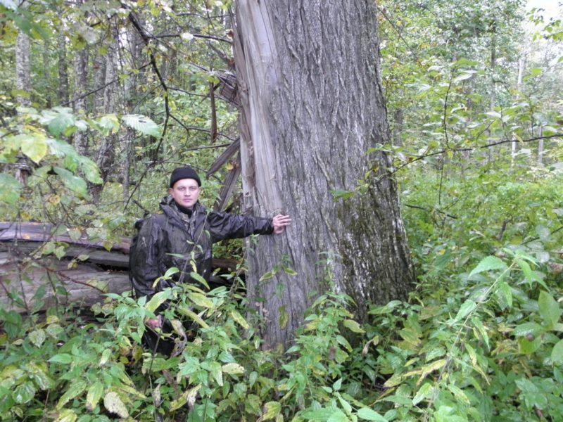 М. Ю. Кузьминых около сломленного 200-летнего дуба. Фото Л. Г. Целищевой
