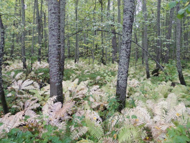 В осеннем лесу. Фото Л. Г. Целищевой