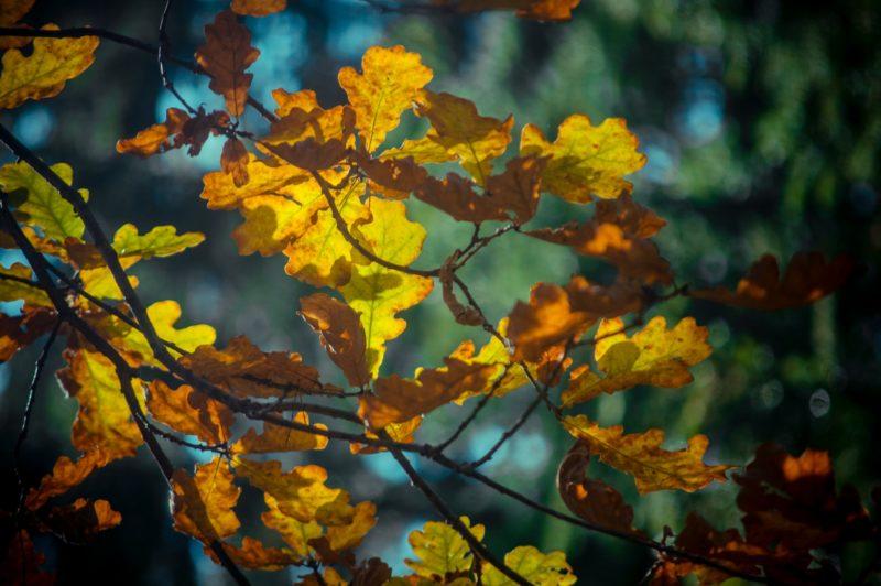 Краски осени. Фото Е.П. Кондруховой