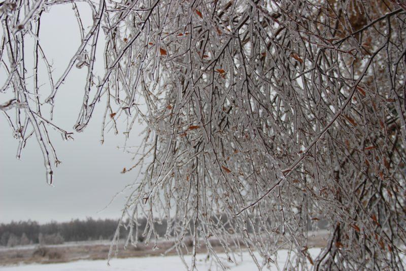 _Сказочный лес_. Фото Е. В. Князевой