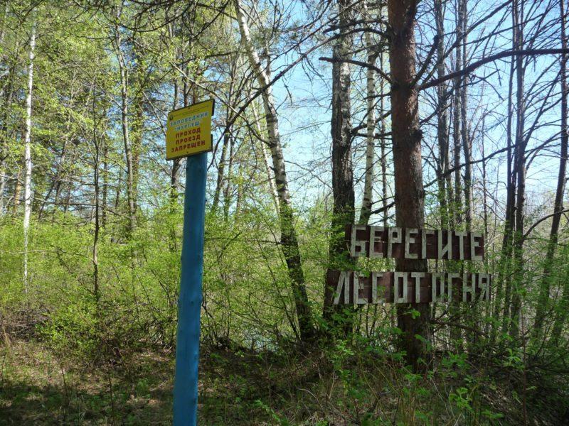Аншлаг на границе заповедника. Фото М. Ю.  Кузьминых