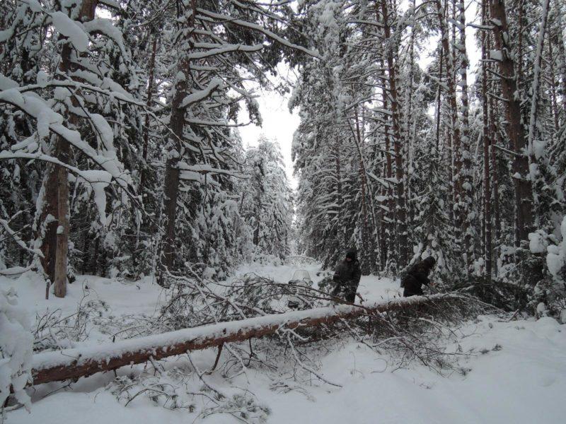 Работа в заснеженном лесу. Фото Е. М. Тарасовой