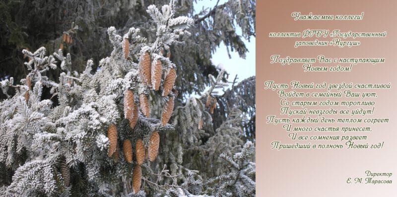 С наступающим Новым годом и Рождеством от Нургуша!