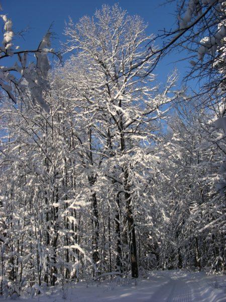 Заповедник зимой. Фото Кондруховой С.В.