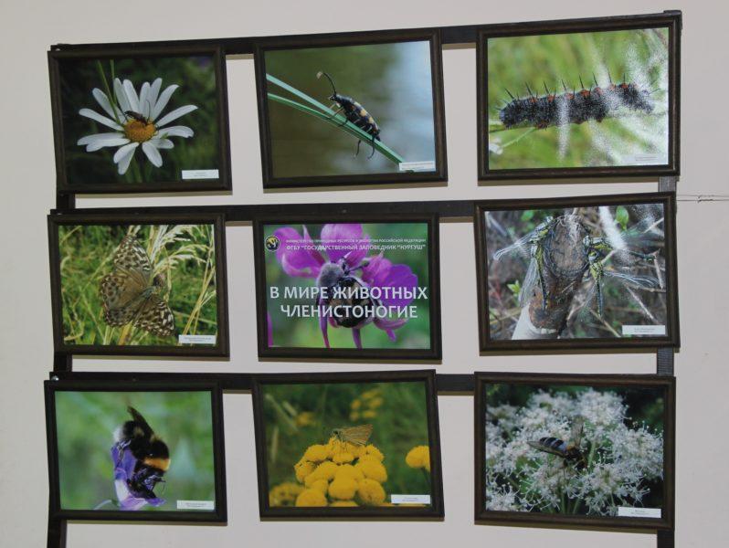 Выставка ,В мире животных. Членистоногие, Фото Е. В. Князевой