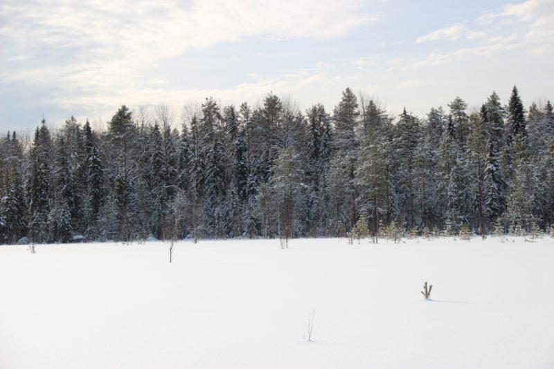 Маматовское болото. Фото Е. В. Князевой