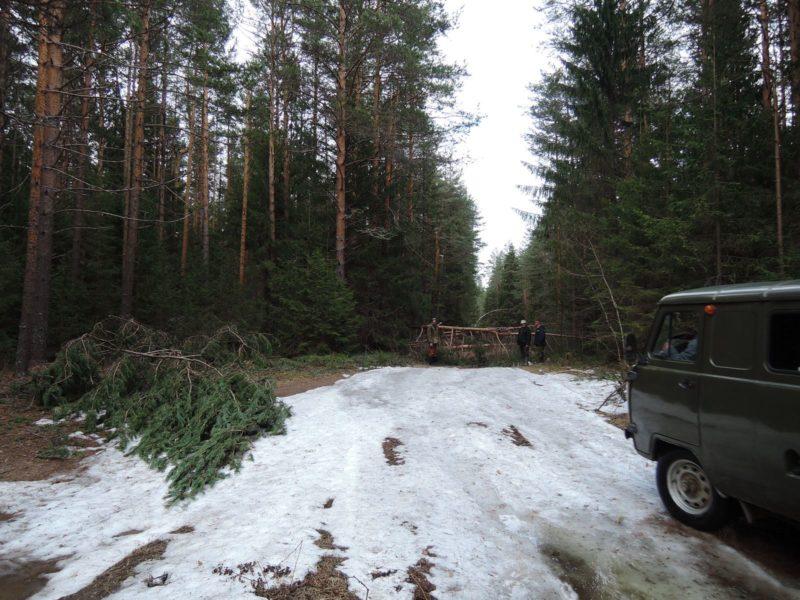 Мокрый снег вновь повалил и поломал деревья. Фото Е. М. Тарасовой