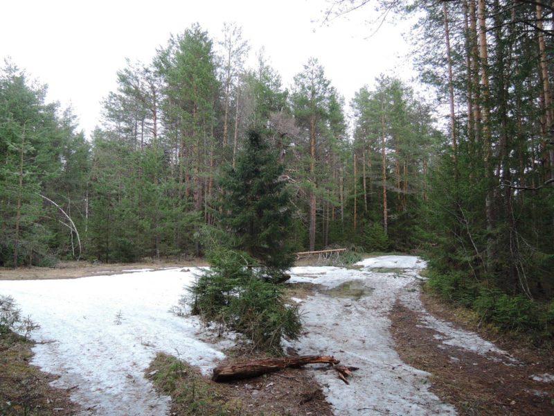 Последний снег в охранной зоне. Фото Е. М. Тарасовой