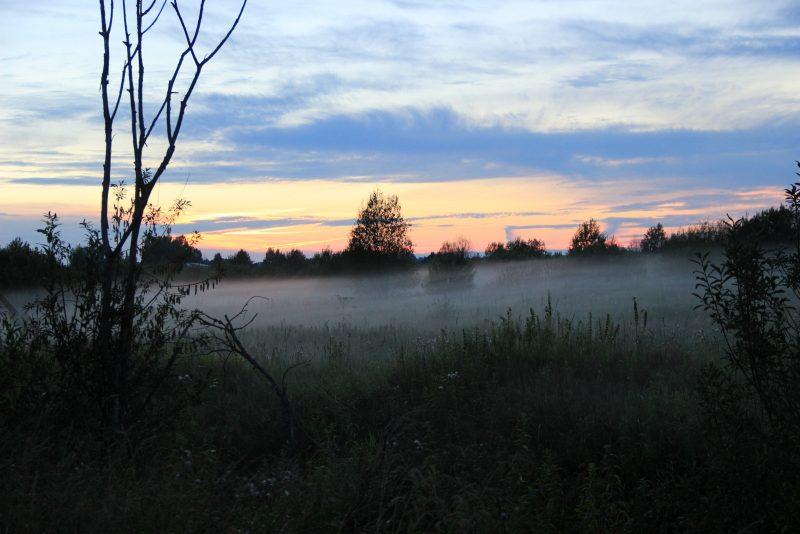 Вечер. Фото Е. В. Князевой