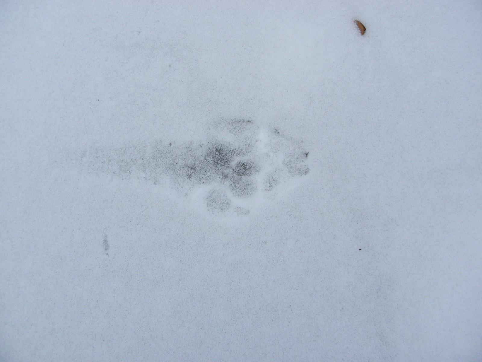 правильно след волка на снегу фото рюноскэ, биография