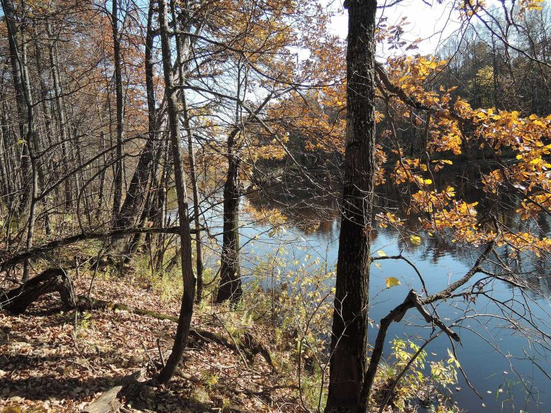 Озеро Малое Кривое. Фото Е.М. Тарасовой